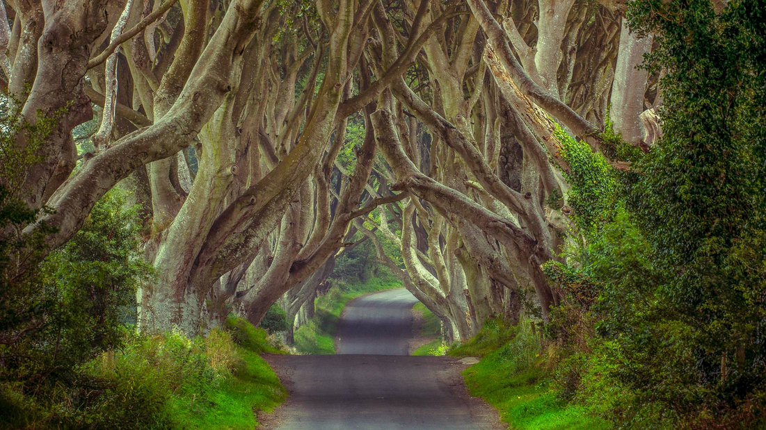 GuestToGuest, traveling, sharing economy, fairytale locations, dark hedges