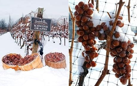 p_snow-ice-wine_1567695a