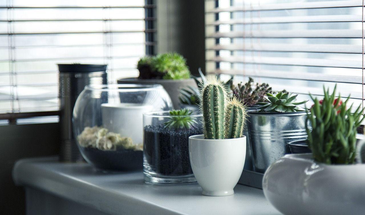 home exchange plants on display