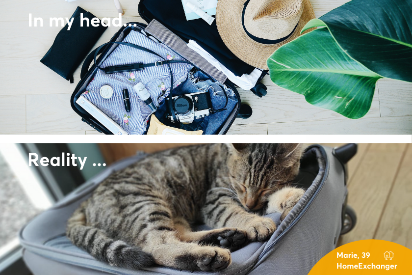 Alt Expectations-vs-reality_suitcase_cat-1, title Expectations-vs-reality_suitcase_cat-1