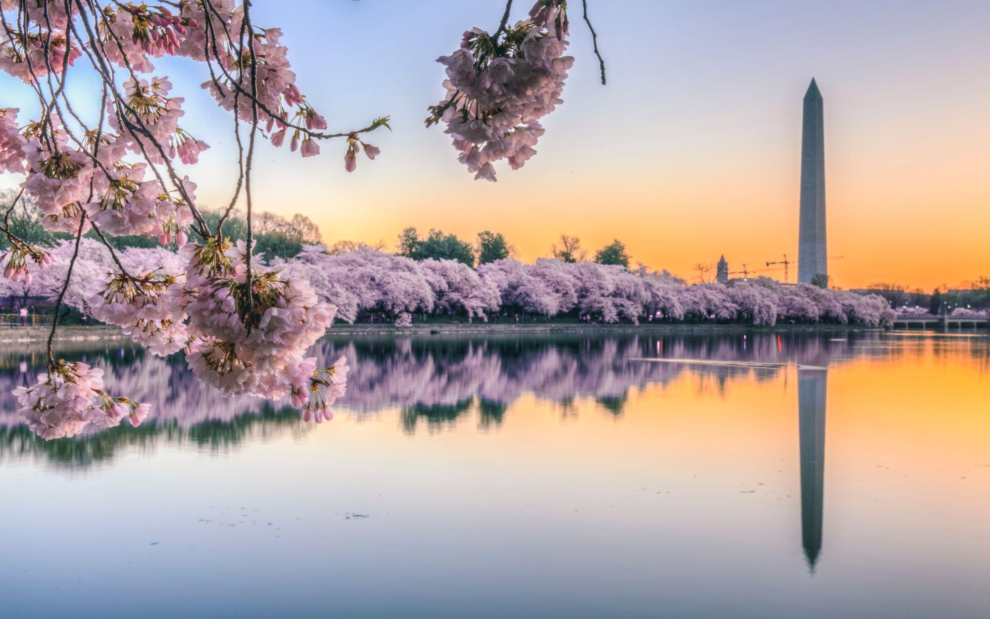 Washington DC vacation rental alternatives for the 2021 Cherry Blossom Festival