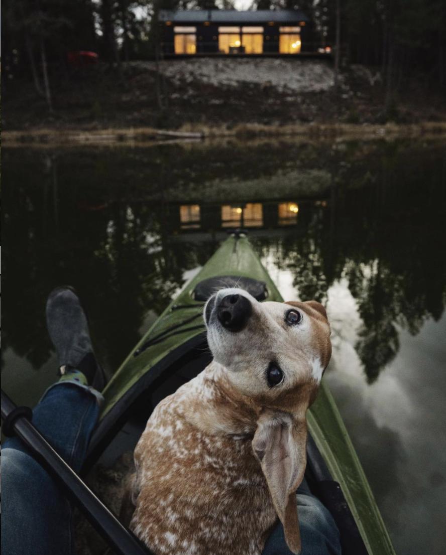Maddie, Theron Humphrey's coonhound