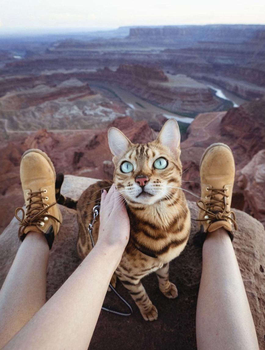 Suki the cat